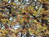 lobi bruciacchiati d'autunno