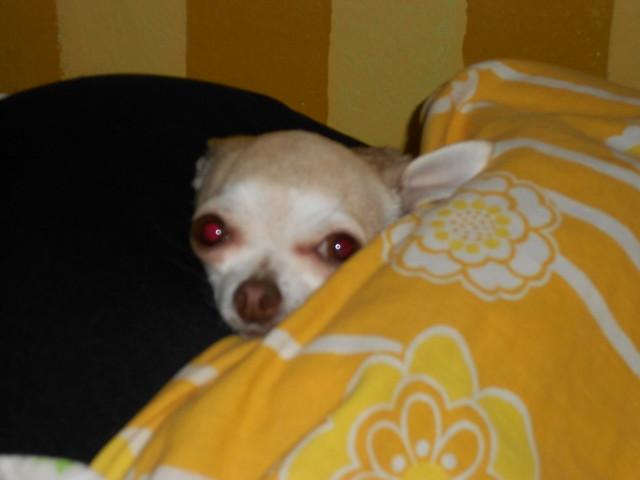 Sleepy Xoco