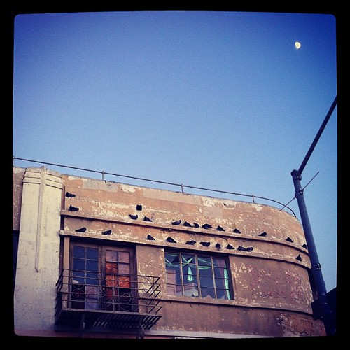 Pigeon happy hour, a rusty old balcony, and the moon.