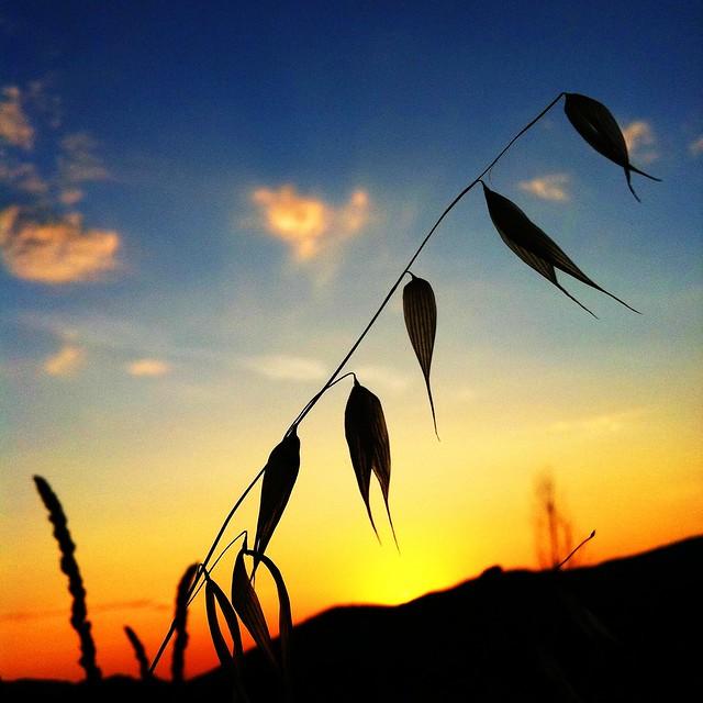 depth of field sunset