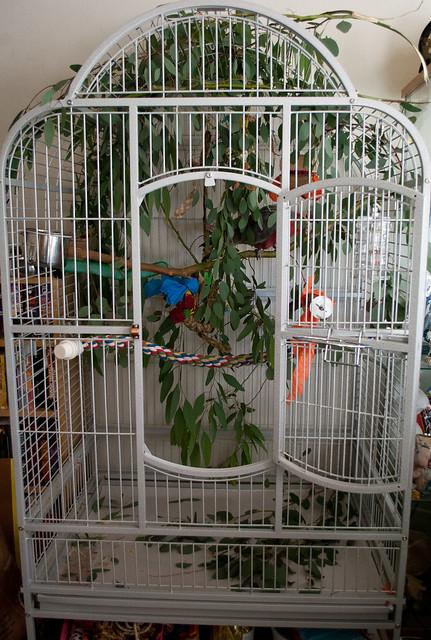 Cockatoos for Sale in Virginia - Birds Now