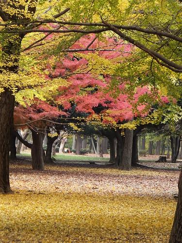 秋色の空間