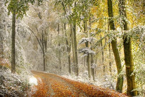 Der erste Schnee - The first snow