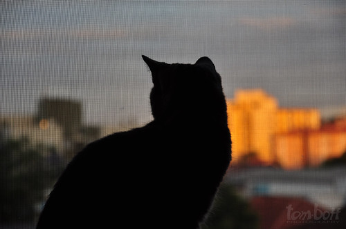 sunset pordosol brasil cat molly gato 2012 d90