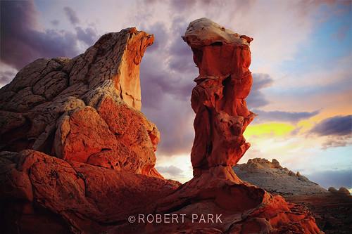 """""""Star Gaze"""" By Robert Park                             http://www.robert-park.com by Robert Park Photography"""