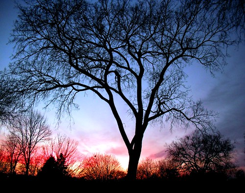 ~ A tree against the sky possesses the same interest, the same character, the same expression as the figure of a human ~ by Purpletree..(Nancy Lee)