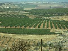 valley(0.0), hill(0.0), paddy field(0.0), plateau(0.0), terrace(0.0), agriculture(1.0), field(1.0), soil(1.0), plain(1.0), crop(1.0), landscape(1.0), rural area(1.0), grassland(1.0), vineyard(1.0), plantation(1.0),