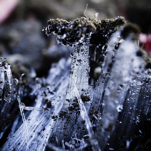 Ice Fungi, 2012, Kasai 01