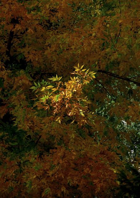 Una rama iluminada