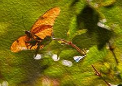 05 - Butterfly at Albuquerque BioPark