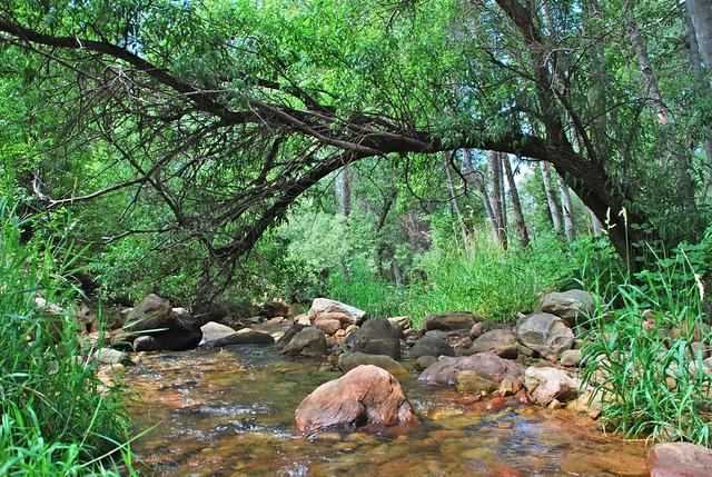 Summer, nature, creek, natural light photography