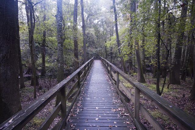 Elevated boardwalk trail