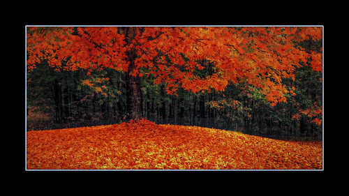 autumn tree fall maple tennessee canon60d theappalachiancenterforcraft