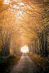 [フリー画像素材] 道路・道, 森林, 紅葉・黄葉 ID:201211201200