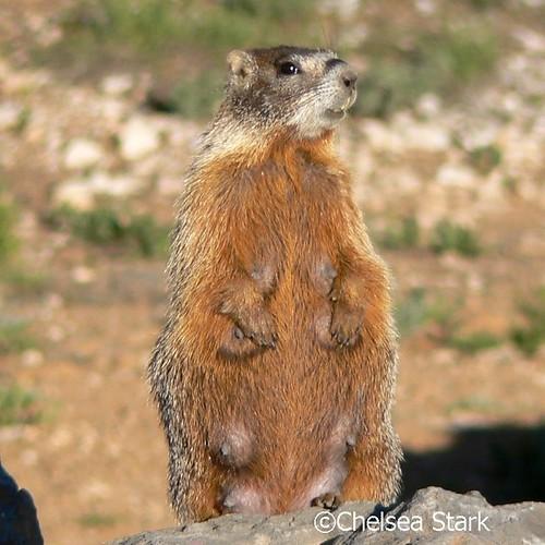 Mom ©ChelseaStark http://www.chelseastarkphotography.com by chelseastarkphotography.com