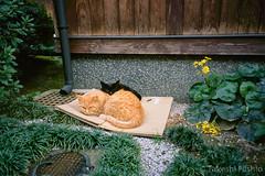 仲良し猫 / Friends