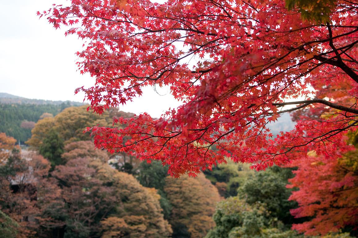 赤の景色|永源寺