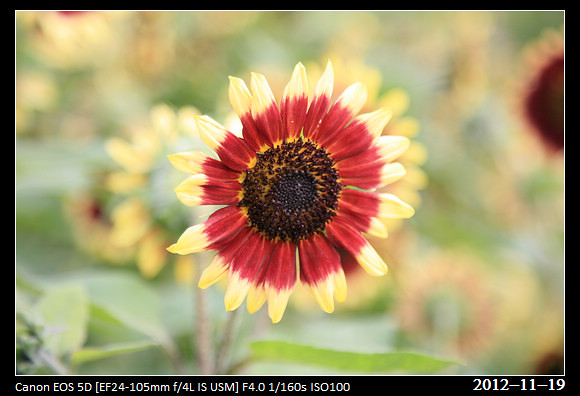 20121119_Flower54