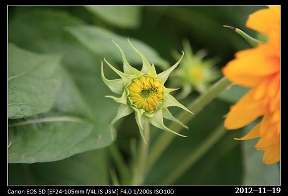 20121119_Flower53