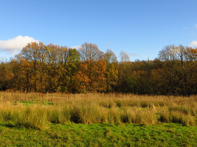 The Ladies Pond Meadow