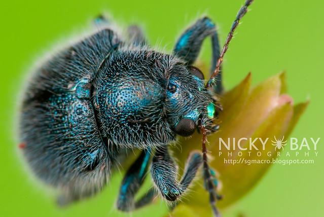 Beetle - DSC_4535