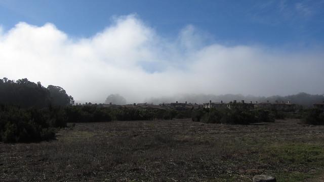 IMG_3587 Tree in fog Goleta The Bluffs Sperling