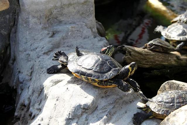 turtles lying in the sun at Sea life Blankenberge