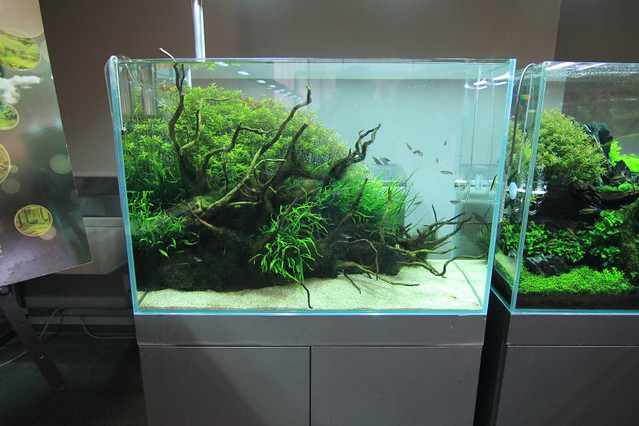 Amazing Aquascaping Is A Marriage Between Art And Farming My Blog:  Http://aquatic Art.blogspot.com/