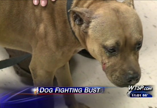 FL Dog Fighting Ring