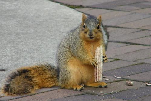 Happiest Squirrel at the University of Michigan & His Churro (November 28, 2012)