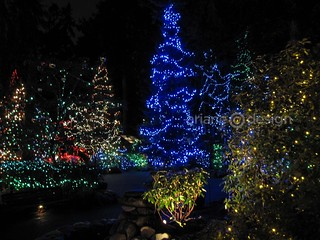 Capilano Suspension Bridge Canyon Lights-10