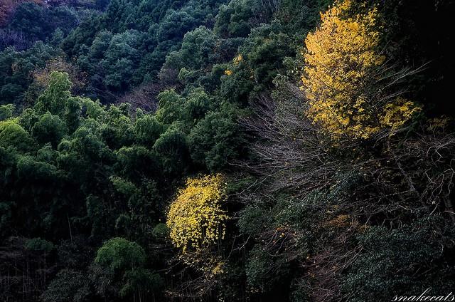 「散り際」 室生界隈 - 奈良