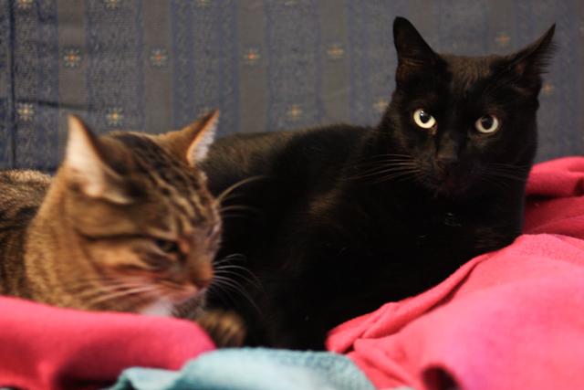 dois gatos com frio