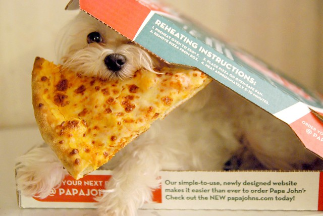 Pizza Puppy