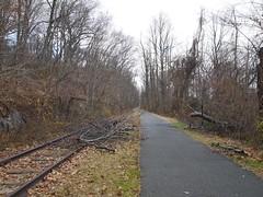 土, 2012-11-24 14:57 - North County Trailの線路跡と倒木