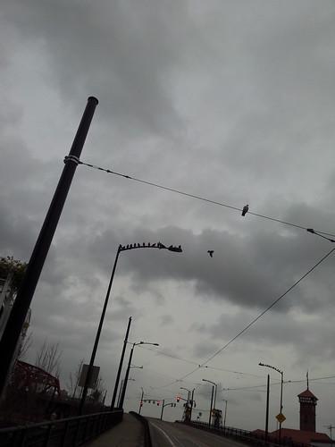 bird cliques