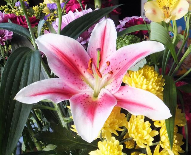 Birthday Flowers, Fujifilm FinePix Z900EXR