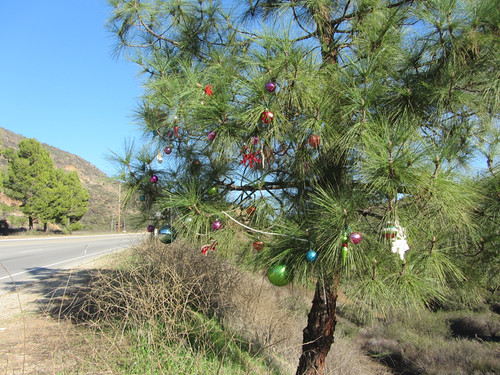 roadside tree