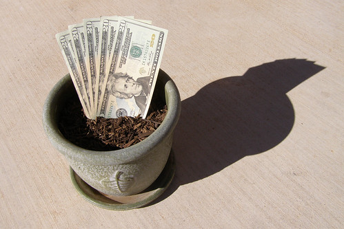 Money growing in potted soil.