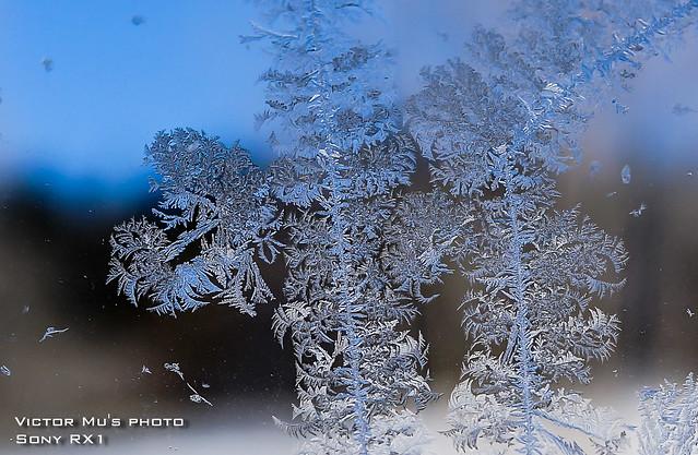 北海道 星野度假村 門上都結冰晶了