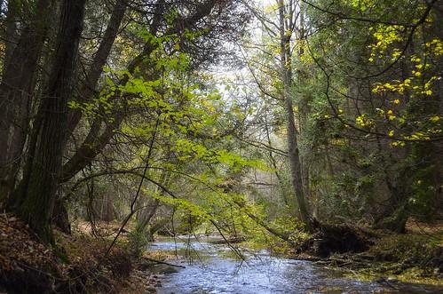 autumn trees fall water leaves creek forest leaf woods claremont duffinscreek d7000 claremontconservationarea durhamregionenvironmentaleducationcentre