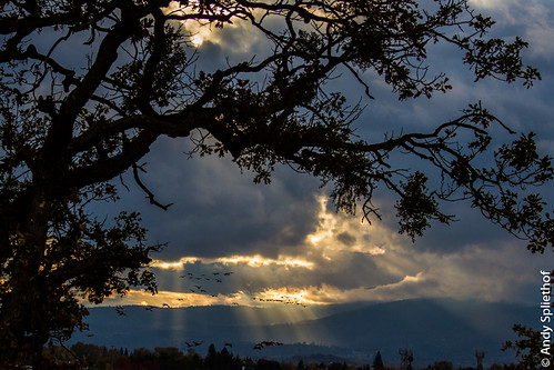 sunset storm clouds geese oaktree theoak