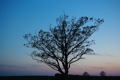 20120522-05_Silhouetted Tree by gary.hadden