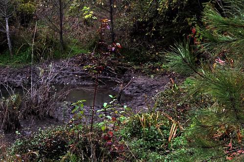 Breached beaver dam