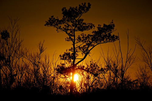 sunset silhouette outdoors loveit delaware primehook ringexcellence dblringexcellence tplringexcellence loveitshowoffthread