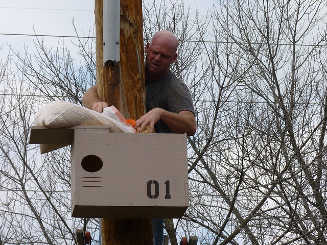 Barn Owl Box at IBSP Lake County
