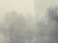 morning fog on the bridge