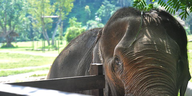 elephant close-up in park