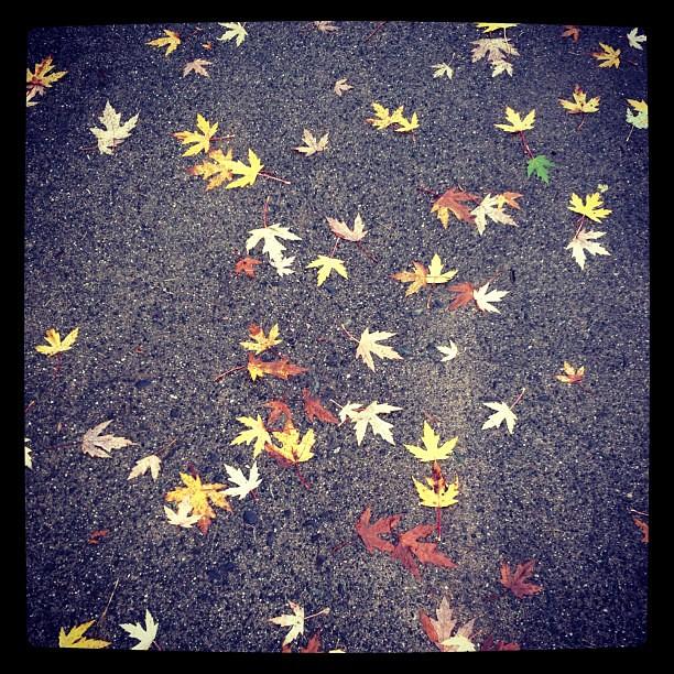 rain & leaves