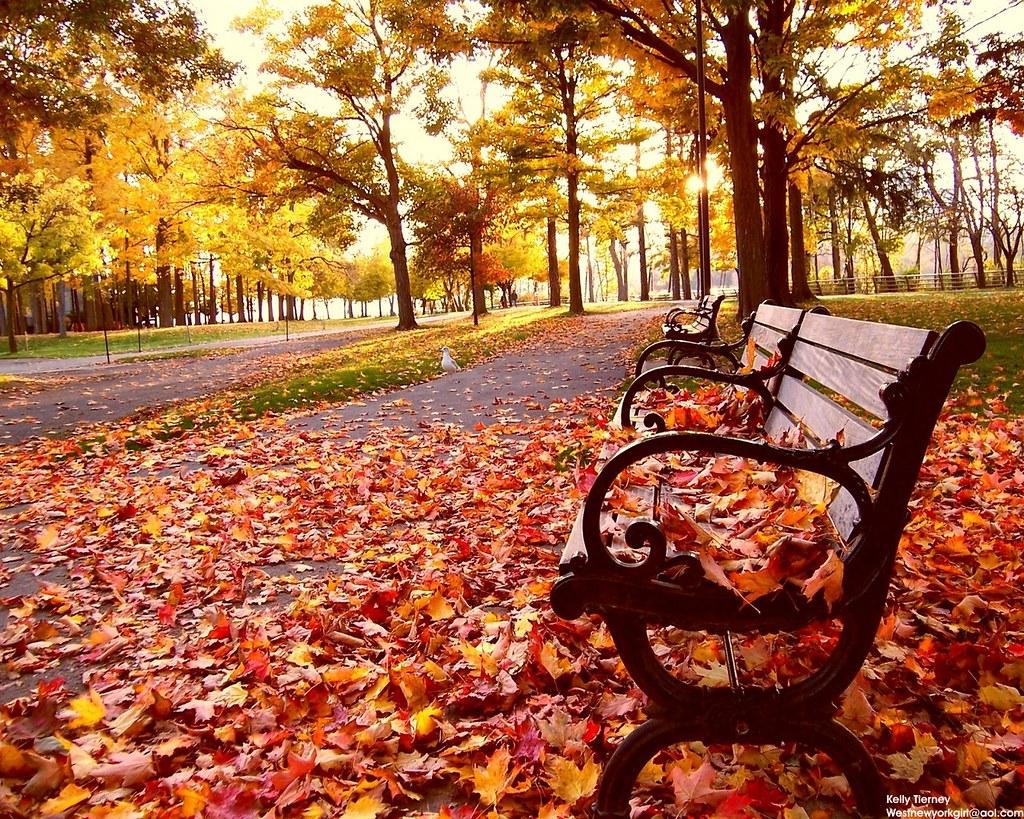 nature_photography_bench_fall_desktop_1280x1024_hd-wallpaper-18286